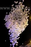 Puszczamy balony z helem jako atrakcja Jarmarku Świątecznego w Rybniku.