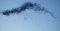 Wypuszczone balony helowe na tle nieba.
