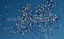 Wypuszczone balony helowe odlatują w dal.