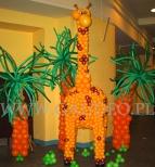 Żyrafa z balonów na imprezie firmowej.